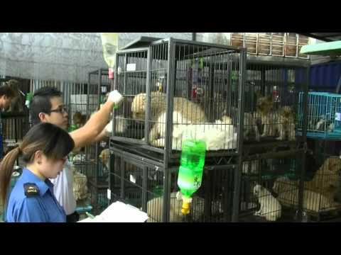 Spca Dog Rescue 2010