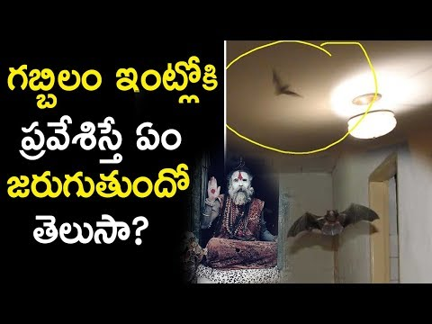 What Happens If BAT Enters Into Home? | Are Bats Dangerous in your Home? | Tollywood Nagar