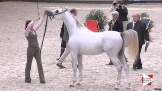 N.75 ZAHIM-D - DEAUVILLE 2015 - 2 year old colts (Class 7)