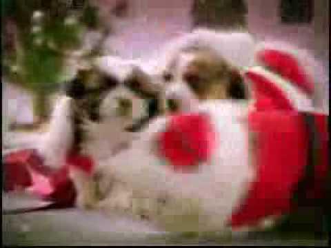 Perros Cantando Navidad Perros Cantando
