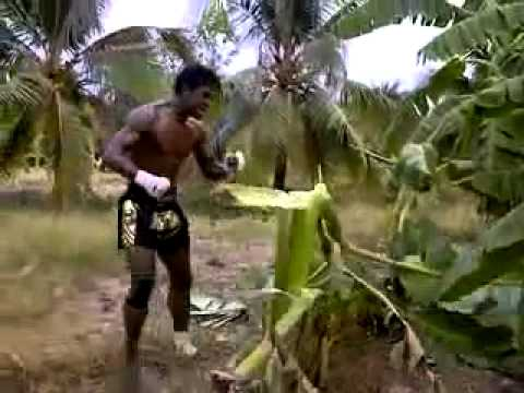 Muay Thai Training - Buakaw, smashing a Tree... Must watch Image 1