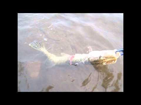 рыбалка на бурее видео
