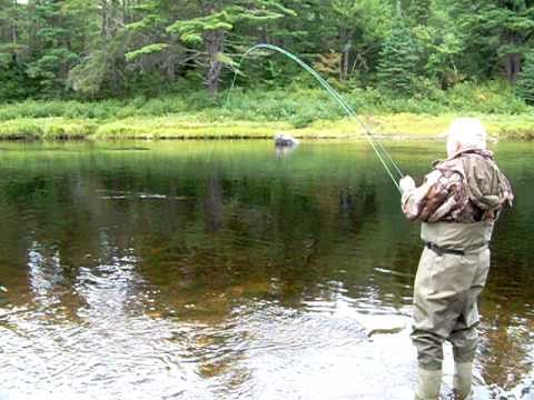 A large atlantic salmon coming from the Miramichi river to the Cains river in N.B. Canada