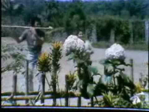 Rhoma Irama - Primadona Desa
