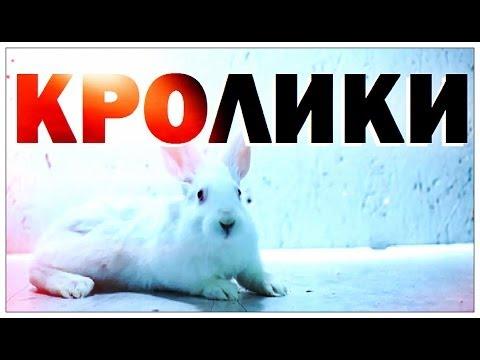 Галилео. Кролики