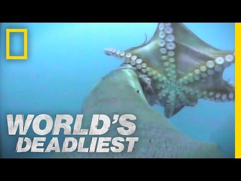 World's Deadliest - Sea Lion vs. Octopus