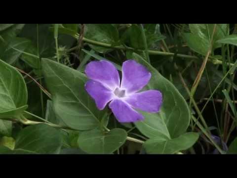 Ein Tag Am Weiher - Gartenweiher - Gartenteich - Teich - Tier Doku
