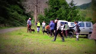 Kiwi Aversion Training