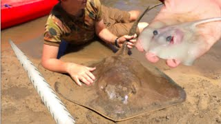 RARE FOOTAGE: Stingray Giving Birth, Boy Delivers 12 Stingrays! HD