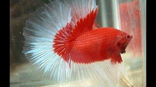 Most Beautiful and Popular Aquarium Fishes