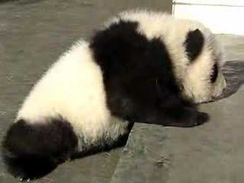 The Most Pathetic Baby Panda Ever Video