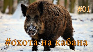 Охота на кабана с лошарой  Hunting for wild boar