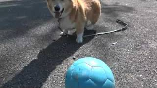 SONY Cyber-shotDSC-HX9VVideo taken by the state of the dog run
