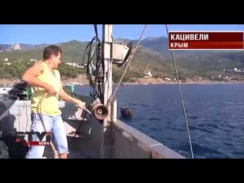 Россия может остаться без крымских устриц