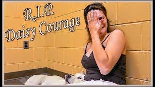 Daisy Courage-- Daisy goes to Heaven