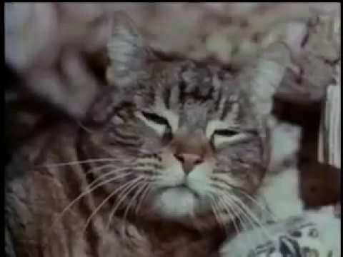Amityville   The Evil Escapes -  Horreur film complet en francais streaming vf