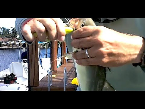 30milesOUT- ft. lauderdale canal jack crevalle - on top water plugs