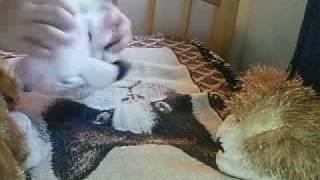 Watch Webkinz Piggy Plum Pie video