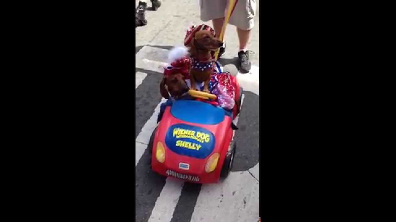 [Comic-Con  - Wiener Dog Internationals Drive Car And Speak !...] Video