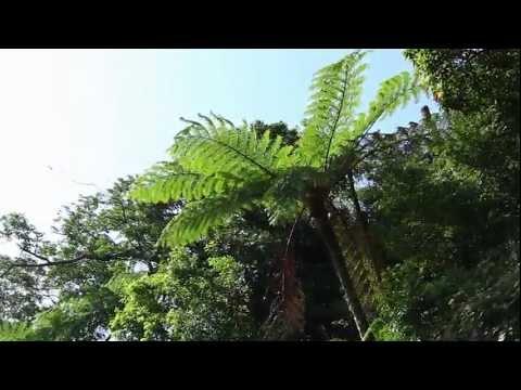 陽明山國家公園_陽明山常見的蕨類