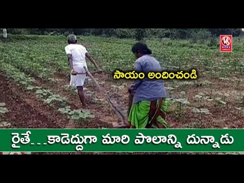 Poor Nirmal Farmer Uses His Body in Place Of Bull To Pull Plough | V6 News