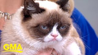 Internet sensation Grumpy Cat has died at age 7 | GMA Digital