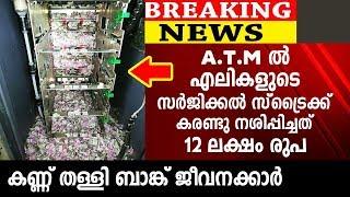 A . T . M ൽ എലികളുടെ സർജിക്കൽ സ്ട്രൈക്ക് നശിപ്പിച്ചത് 12 ലക്ഷം രുപ | Trending News
