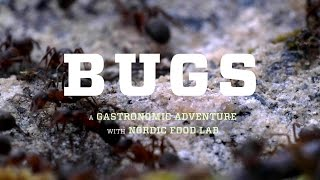 BUGS the film – Will eating insects save our Earth? – official trailer #Tribeca2016