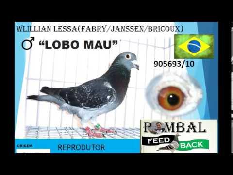 POMBAL FEED BACK REPRODU��O 2014