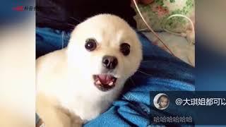 【抖音视频】是小海豹吗??2018 可爱萌宠合集(4) 超级可爱 cute animals