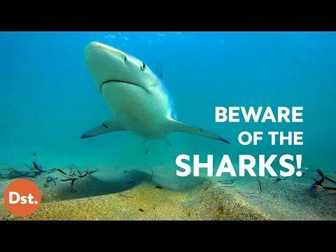 10 Most Dangerous Beaches for Deadly Shark Attacks