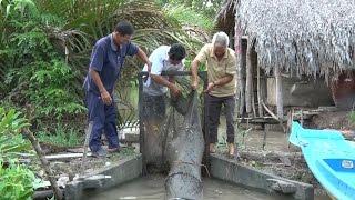 Diện tích nuôi tôm quảng canh tiếp tục thiệt hại ở Cà Mau