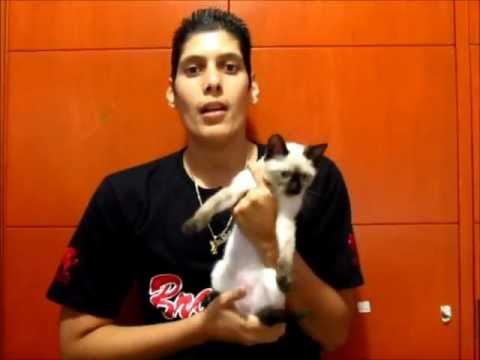Los Errores Mas Comunes En La Crianza De Gatos Parte1