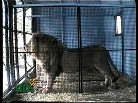 El Confinamiento de Animales en Circos