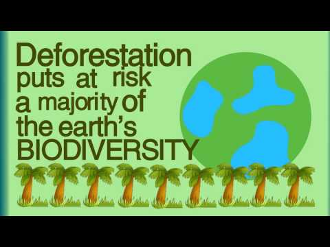 What is Deforestation? (Kinetic Typography)