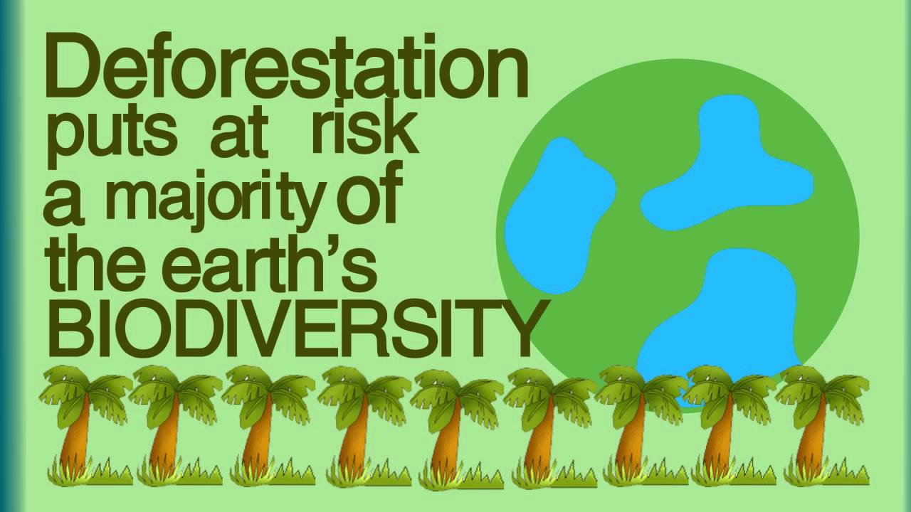 What Is Deforestation Youtube