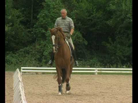 Klaus Balkenhol – from foal to Grand Prix horse. Part 2: From novice horse to the schooled horse
