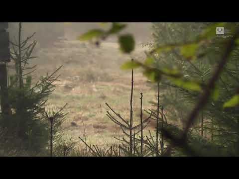 Rehwildjagd September 2014 / Deer hunting in Germany