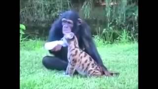 Racism?? I wish I were a monkey -- quem dera eu fosse um macaco Hildo Paixao