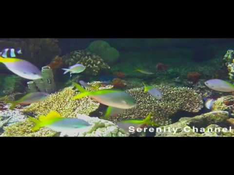 Aquariums In Houses. Aquariums HD. Aquariums HD