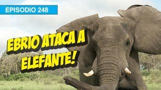 Ebrio Ataca a Elefante! l whatdafaqshow.com