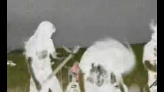 Watch Avulsed Powdered Flesh video