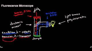 lecture 4 part 3 (fluorescence microscope, applications of fluorescence, photobleaching)
