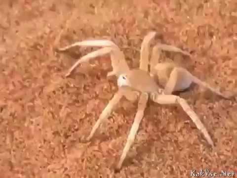 Nope spider gif