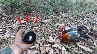 Teknologi Suara Pikat Ayam Hutan Terbaru~Dijamin Pasti Dapat Ayamnya Kalau Pakek Ini