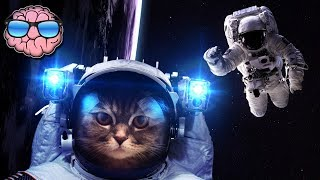 10 ANIMALS That Went to SPACE