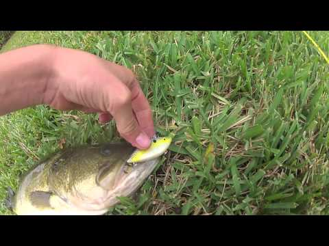 Fall Bass Fishing with Crankbaits, Swimbaits, and Lipless Crankbaits