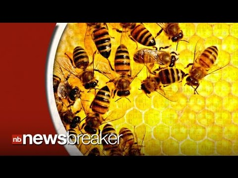 Report Indicates Honey Bees are Mysteriously Dying at Alarming Rates
