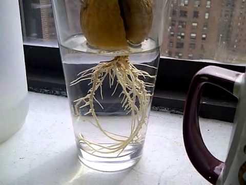 how to take sabja seeds