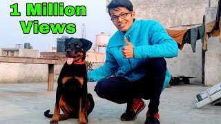 Most Intelligent Dog Rottweiler || Better Than Humans || Review reloaded